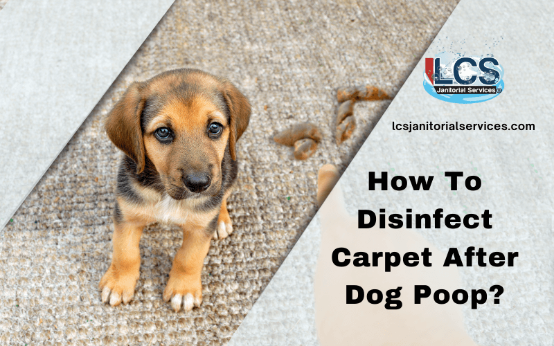 How To Disinfect Carpet After Dog Poop?